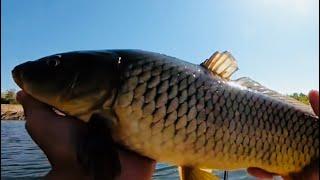 КАКАЯ НАЖИВКА РАБОТАЕТ ОСЕНЬЮ ПО САЗАНУ??? Ахтуба Астрахань осень рыбалка 2019.