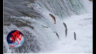 Cá vượt ngược dòng là cá sống, người vượt nghịch cảnh người thành công