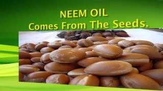 NEEM OIL ANTI-AGING BENEFITS!