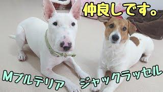 犬のひみつきちホームページ http://www.dogs-base.com/ てるおくん『同...