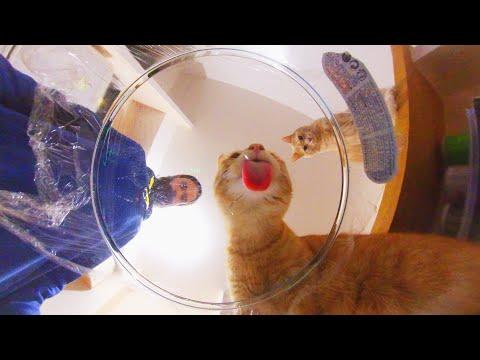 うちの猫たちと360度カメラでasmr動画を撮ってみた!(日本語字幕)