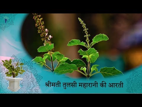 Prayers to Tulsi Maharani with Lyrics | Tulsi Aarti