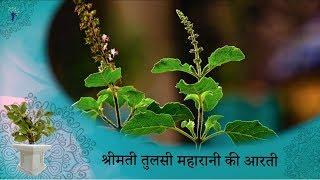 prayers-to-tulsi-maharani-with-tulsi-aarti
