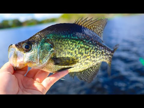 Fishing for Trophy Crappie in HIDDEN Lake (Giant Crappie)