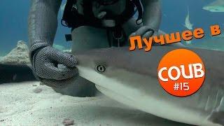 Лучшие приколы в COUB за апрель 2016 #15 Кто хорошая акула?