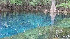 Manatee Springs State Park - Chiefland, Florida
