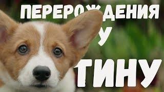 Собачья жизнь -  Перерождение у Тину