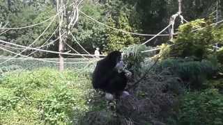 Super małpa-Zoo-Zamość- HD-