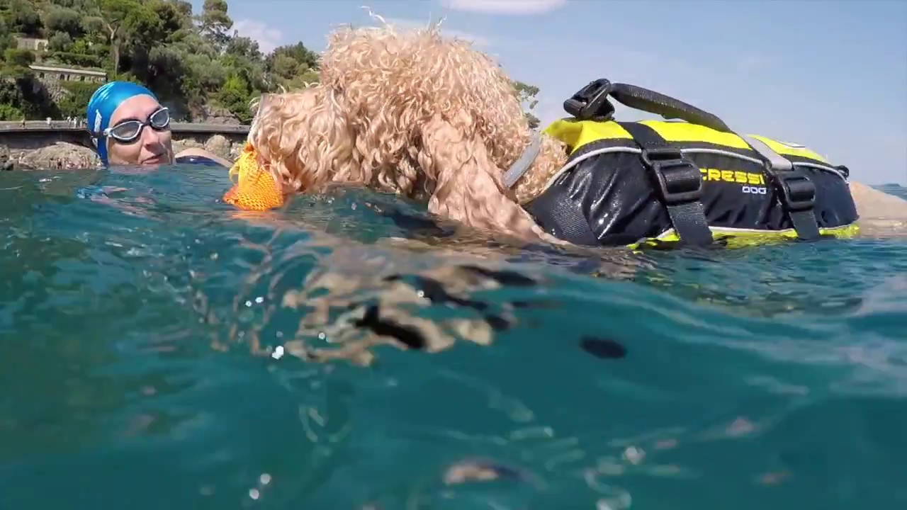Sissy the Poodle wears CRESSI DOG Wetsuit and Life Jacket