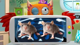 Fun Pet Animal Care Games - Little Fox Animal Doctor - Fun Pet Vet Animal Doctor Care Games For Kids