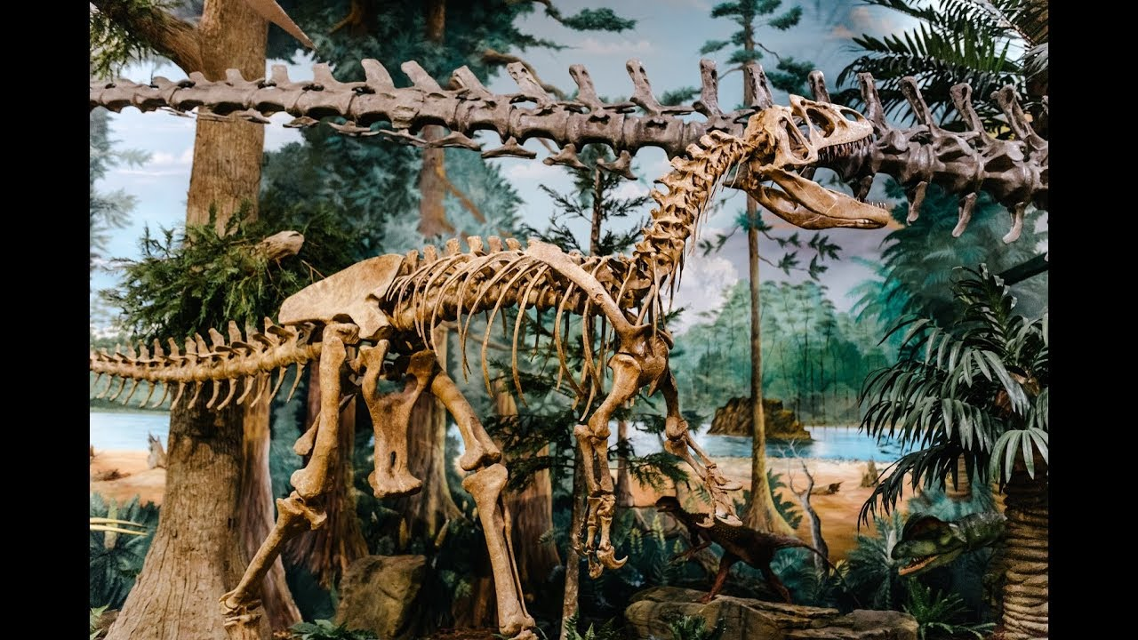 Museum Of Dinosaurs And Ancient Cultures In Cocoa Beach