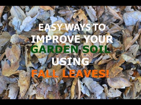 SIMPLE WAYS TO IMPROVE YOUR GARDEN SOIL USING FALL LEAVES