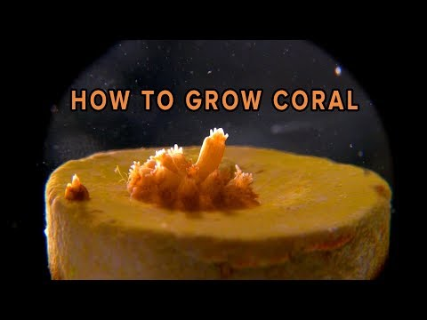 How To Grow Coral