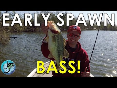 The Key To Finding Spawning Bass | Bass Fishing Strategies