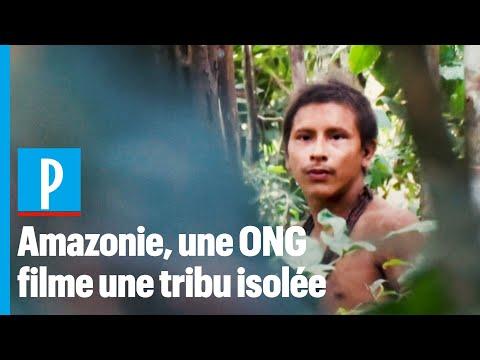 De rares images de la tribu Awa, menacée d'extinction en Amazonie