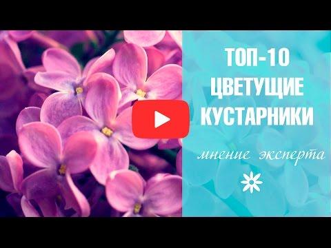 Цветущие кустарники 🌟 Топ-10 садовых кустарников 🌟