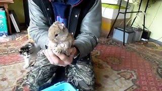 Кролики без ушей