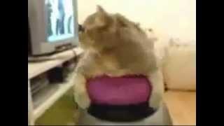 Коты проказники cats pranksters