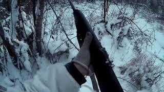 Охота на лося с лайкой(18+) - Hunting for elk