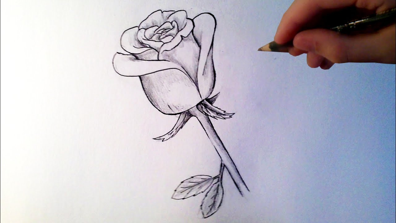 Dessin Simple A Realiser Comment Dessiner Une Rose Tutoriel Youtube