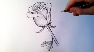 comment dessiner une rose