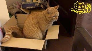 ひろしには狭すぎる箱に入って 大人しくするのかと思いきや 外出たい出...