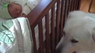 Cachorro encontra bebê pela primeira vez