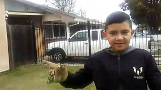 Beast shooting and beast goalkeeper