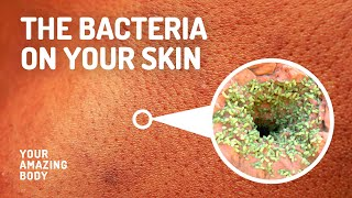 Types Of Bacteria That Live On Your Skin