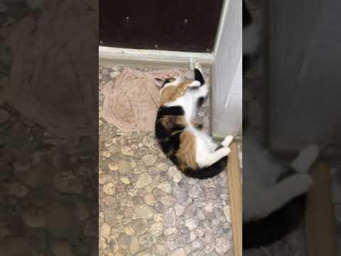 Кошка балдеет от запаха хлорки