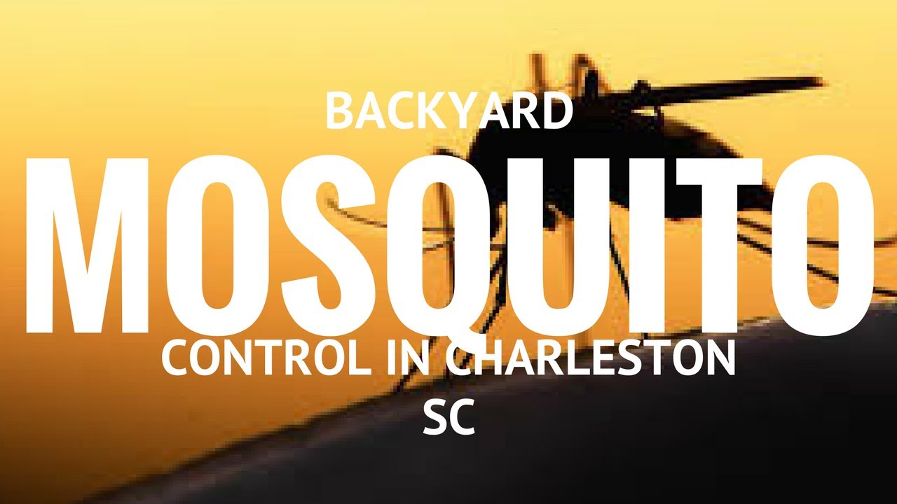 backyard mosquito control in charleston south carolina southern