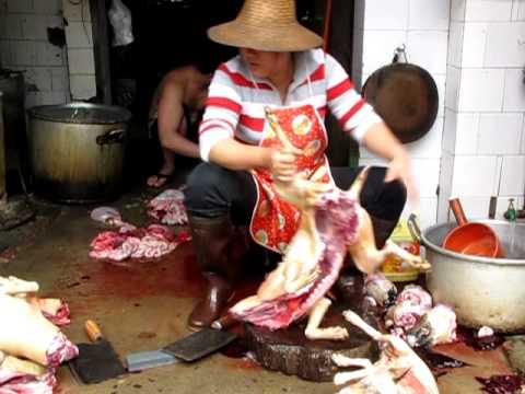 中国・海南島でみた犬の解体☆胴体編(愛犬家は注意)