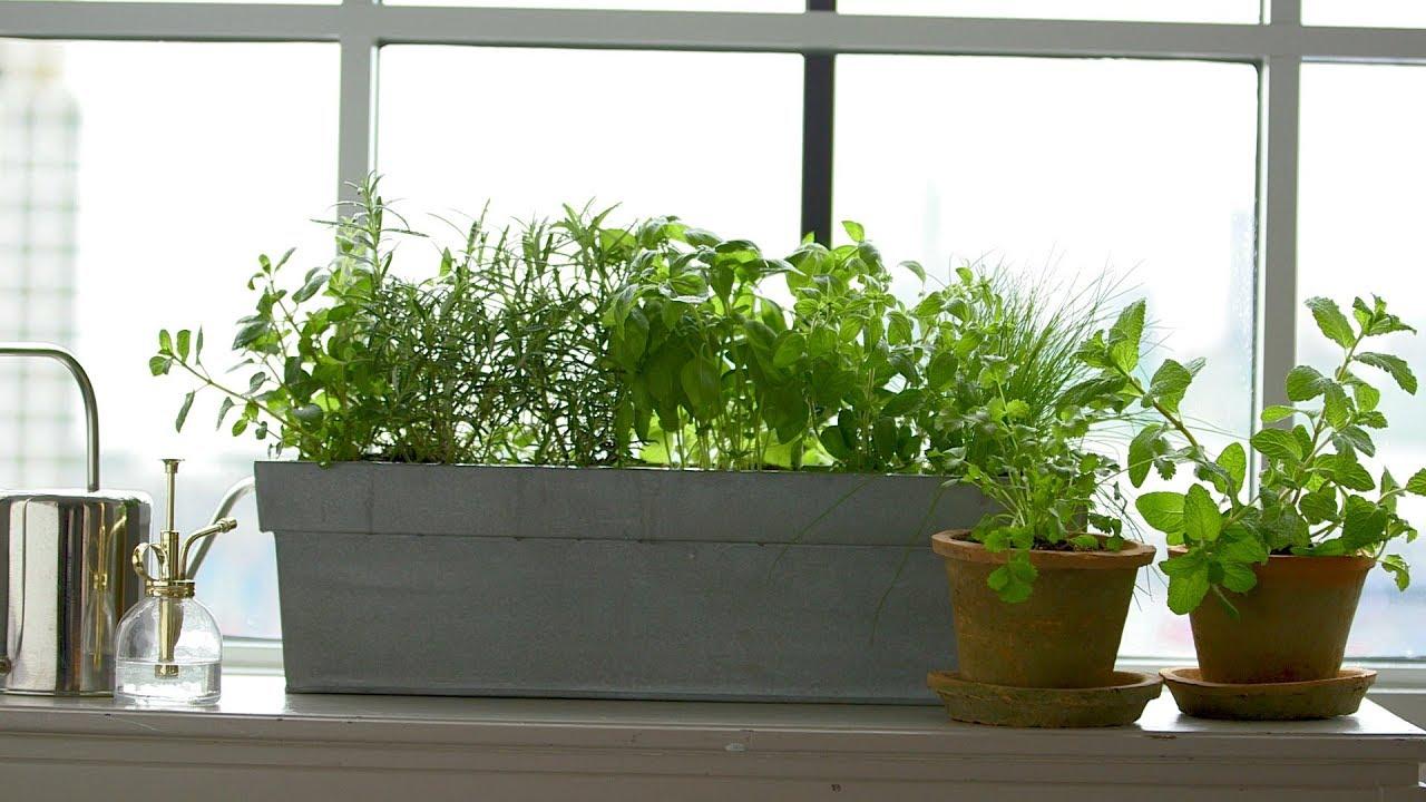 Kitchen Windowsill Herbs Martha