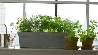 Kitchen Windowsill Herbs - Martha Stewart