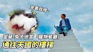 【寵物餐廳】體驗通往天國的樓梯!宜蘭寵物餐廳,驚見歪頭兔子?!【維特】