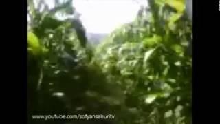 Nyasar di Ladang Jagung
