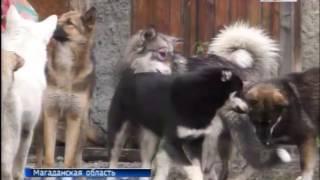 На Колыме почти 3800 безнадзорных собак