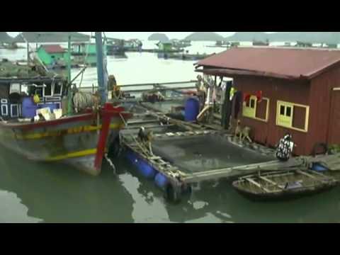 Ha Long Bay Vietnam vacation guide