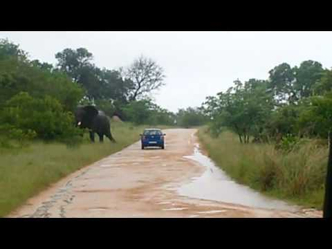 Kruger National Park elephant attack goes viral