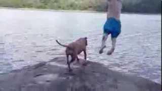 Reakcja psa na skok właściciela do wody.