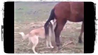 ОЧЕНЬ СМЕШНЫЕ ЖИВОТНЫЕ | MOST FUNNY ANIMALS #542