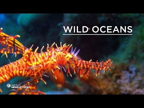 The Weird World Of Seahorses And Pipefish