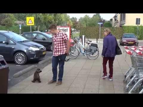 Dog School: Puppy socialiseren