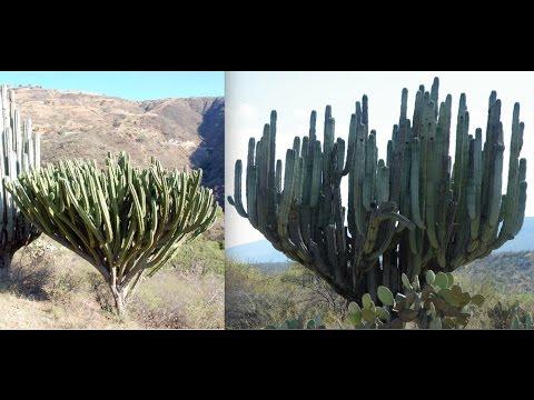 Planting the World's Largest Cactus!  Perfect Cactus Soil