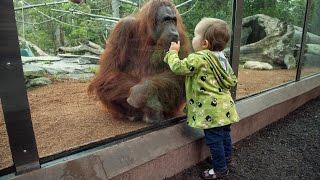 Hayvanlar alemi Hayvanat bahçesinden güzel görüntüler.