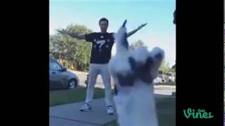 FUNNY ANIMALS DOGS CATS VIDEO - Funny Animals Funny Pranks Funny Fails #29