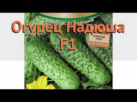 Огурец обыкновенный Надюша F1 (nadyusha f1) 🌿 Надюша F1 обзор: как сажать, семена огурца Надюша F1