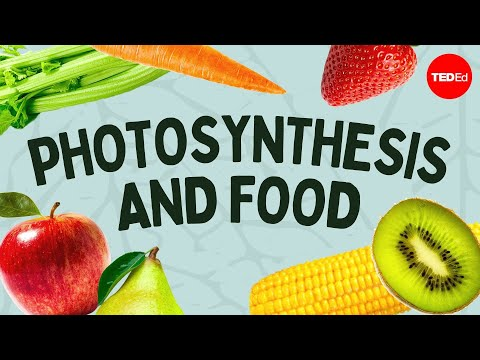 Video image: The simple story of photosynthesis and food - Amanda Ooten