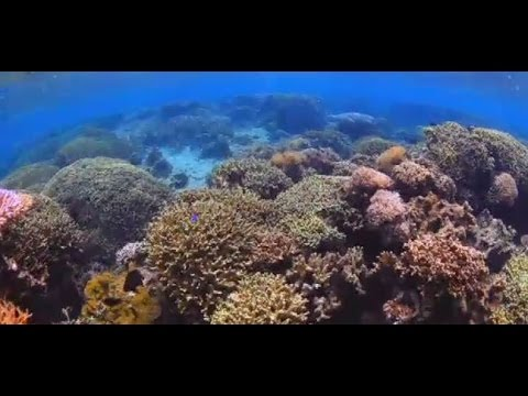 Biodiversity helps coral reefs thrive – and could be part of strategies to save them