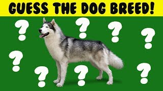 CAN YOU GUESS THE DOG BREED & BRAIN TEASERS!
